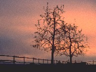 Trees during dusk, Ulm, Germany, 1990