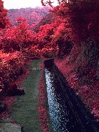 A section of the Levada de Ribeira da Janela in infrared false-color photograph, Island of Madeira, 2003